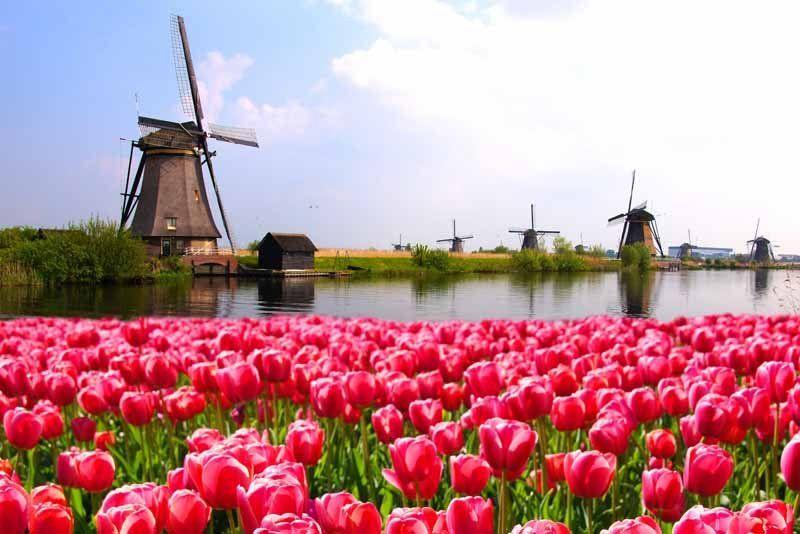 Tulipanes y molinos, en un canal de Holanda